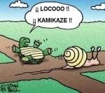 caracol_kamikaze