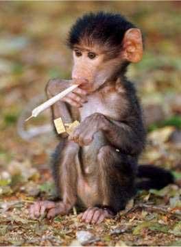 monkeysmoke