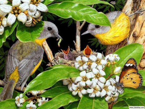 aves12