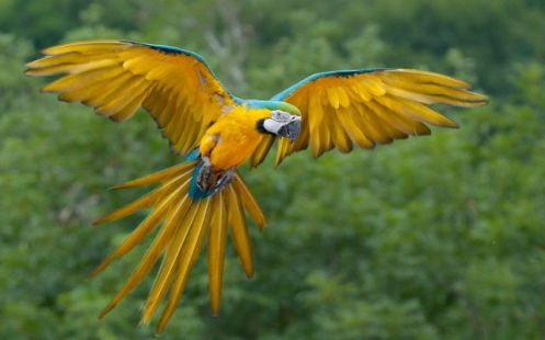 aves14
