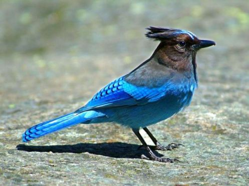 aves16