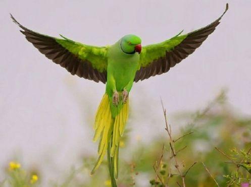 aves17