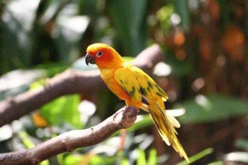 aves18
