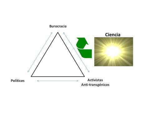 transgénicos2