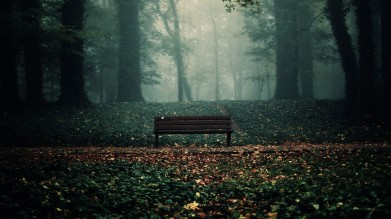 6892683-bench-in-woods-wallpaper