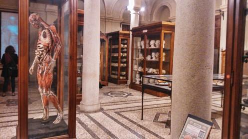 Museo de Anatomia Humana De turin