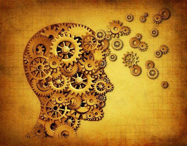 human_brain_mechanics_003